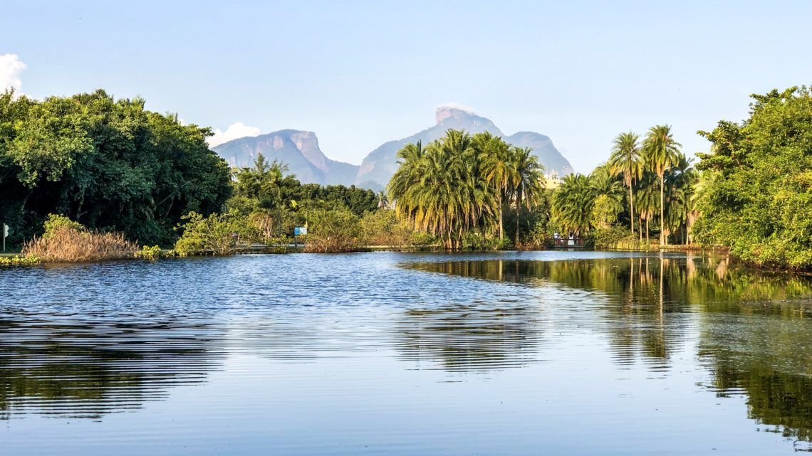 Bosque da Barra: um passeio para a família toda